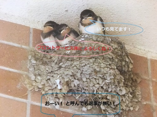 ツバメの子(小).jpg