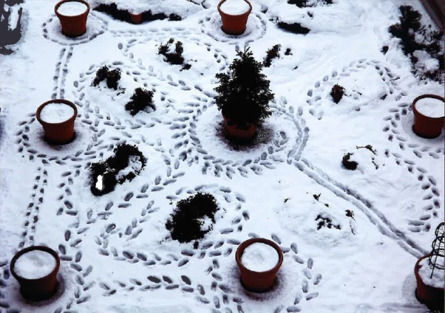 大雪のミステリーサークル.jpg