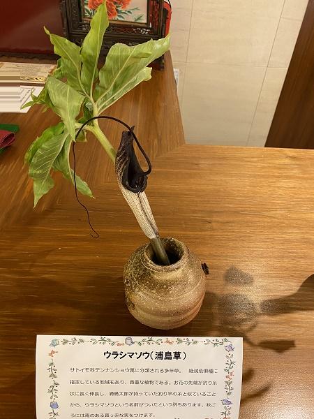浦島草.JPG
