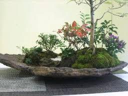 石付き盆栽.jpg