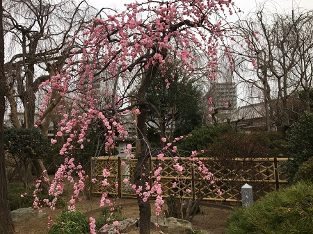 芳林寺-3 450pxl.jpg